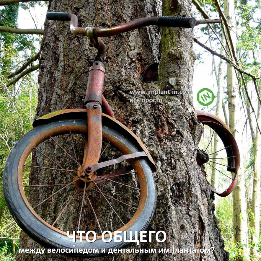 bike in wood_insta